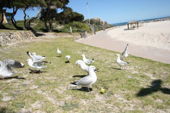 Cottesloe, Australia: Don't be mean