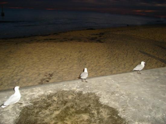 Cottesloe, Australia: Yep they're bloody everywhere!lol