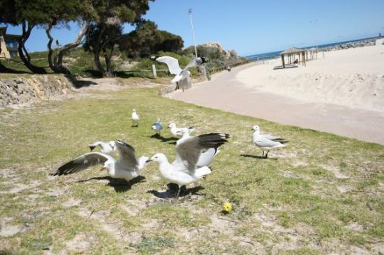 Cottesloe, Australia: Behave yourselves