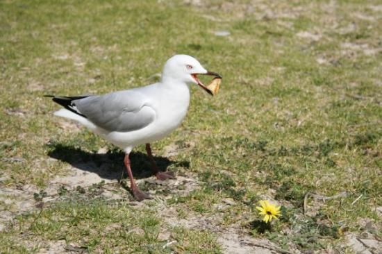 Cottesloe, Australia: This bird reminds me of me lol