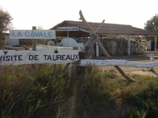 Saintes-Maries de la Mer, France : Qui vient fiare une petite promenade à cheval sur une plage de la Méditéranée?