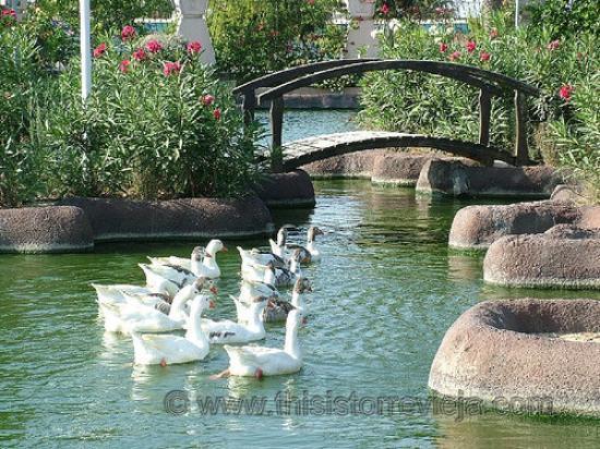 Торревьеха, Испания: Parque de las naciones