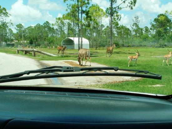 Hotels Near Lion Country Safari West Palm