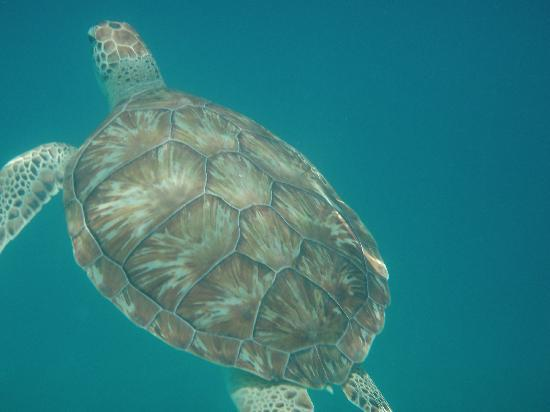 Cool Runnings Catamaran Cruises: Turtle