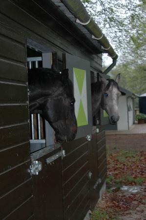 Bed en Stal: onze paarden