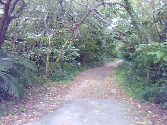 Haemida Beach : ジャングルを抜けると・・・海!