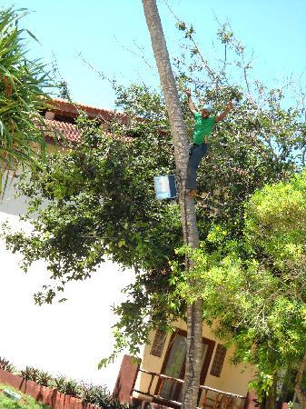 VOI Kiwengwa Resort: cocco fresco...buonissimo...