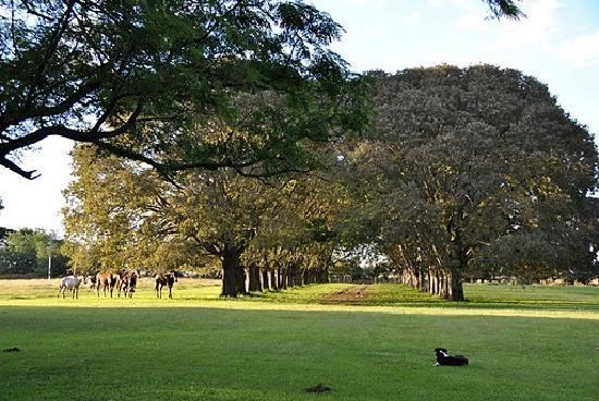 San Antonio de Areco, Argentinien: Arboleda