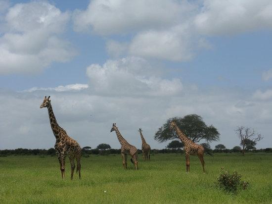 写真ケニア枚