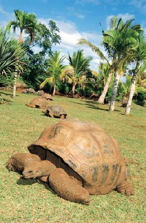 Riviere des Anguilles : enclos tortues genial