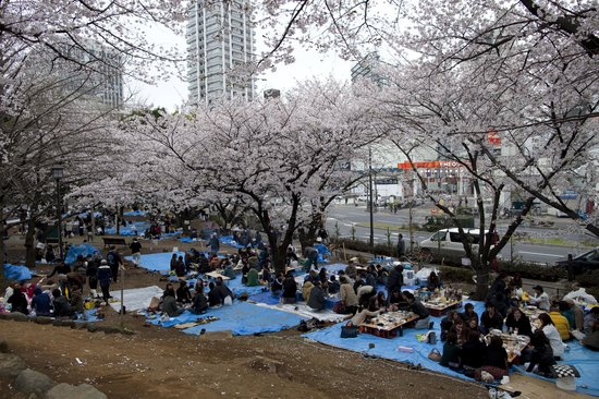 Somerset Azabu East: Hanami in Shiba-koèn, neighbourhood park