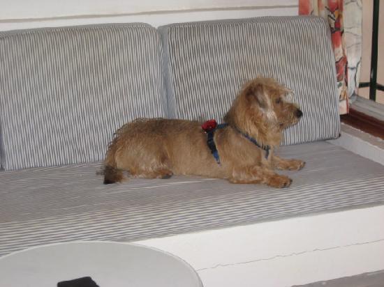 Side Shore: Mein mitgereister Hund