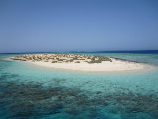 Gorgonia Beach Resort: ile paradisiaque