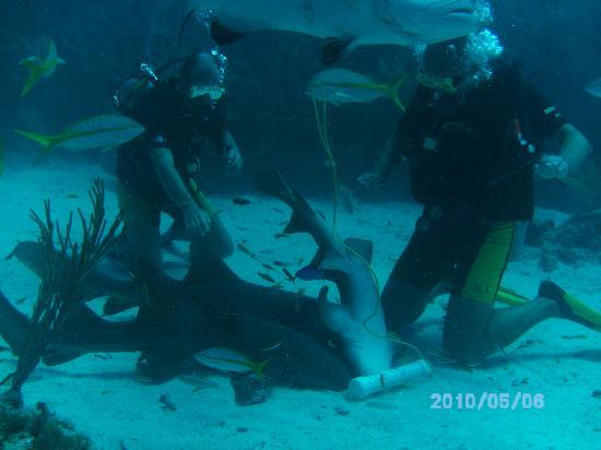 Big Fish Dive Center: Swimming with Wild Sharks