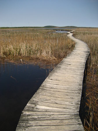 Parker River National Wildlife Refuge : Marsh Trail