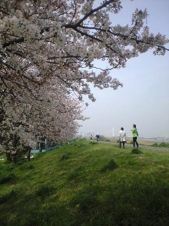 Daishihashi Ugan Teibo Sakuranamiki: 多摩川の河口に近いです