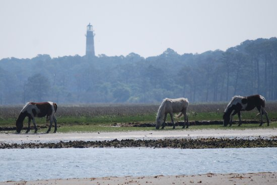 Pulau Chincoteague, VA: Ponies and the Assateague Lighthouse