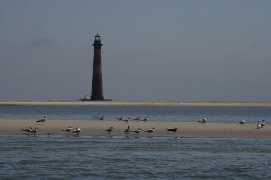 Absolute Reel Screamer Charters: Morris Island Lighthouse w birds