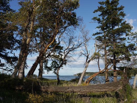 ستيكس آند ستونز كوتيدجيز: Stunning arbutus trees at Bellhouse Provincial Park