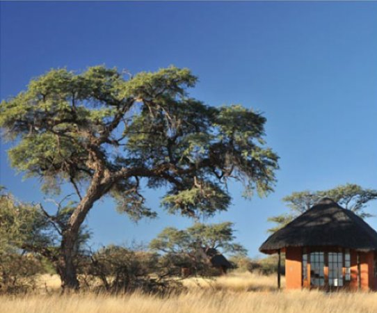 Zebra Kalahari Lodge: Camelthorn Kalahari Lodge