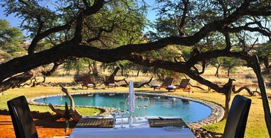 Zebra Kalahari Lodge: Lunch by the pool under a big Camelthorn tree