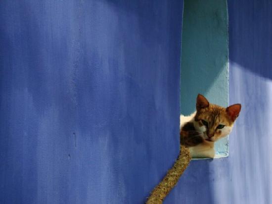 Jackko the cat