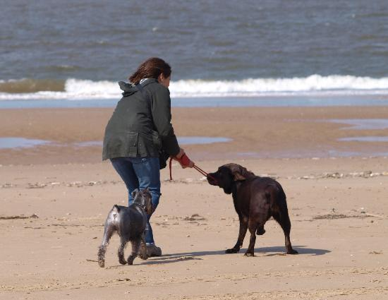 The Old Stables: Fun on the beach with Eddie and Daisy