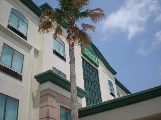 Wingate by Wyndham Houston / Willowbrook : I like a hotel with palm trees!