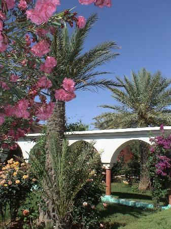 """Hotel Le Riad: Vue depuis les """"suites"""" dans le jardin"""