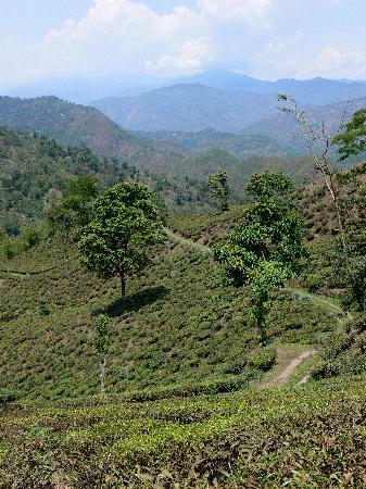 Glenburn Tea Estate: The tea estate