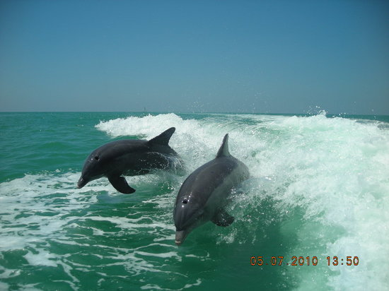 Isla de Sanibel, FL: Sanibel Thriller- our best shot from back of boat..SIMPLY AWESOME!