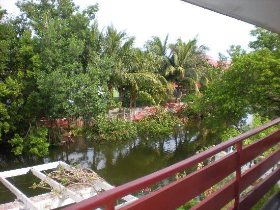 D'Nest Inn: The backyard