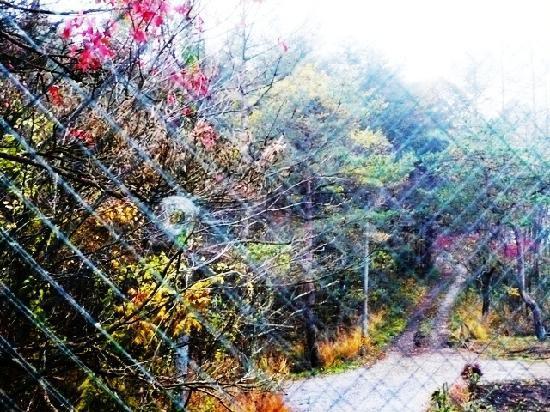 Chisun Inn Karuizawa: 窓から見えた景色