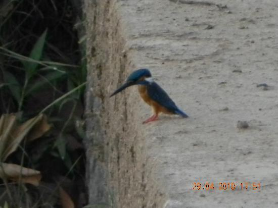 Kanha National Park, India: The Kingfisher