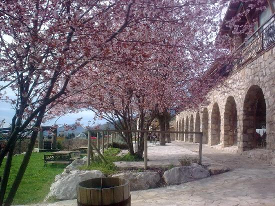 El Jou Hotel: Se notaba que la primavera por fin había llegado en los árboles