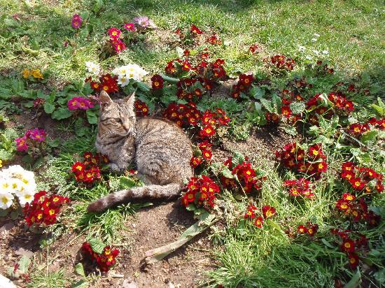 Стамбул, Турция: 幸せそうな猫