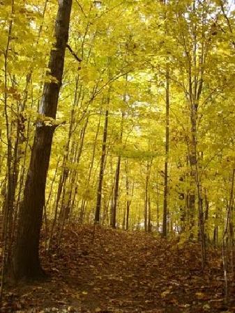 Ganondagan State Historic Site: Autumn Color on the trails, courtesy Kimberly Burkhard