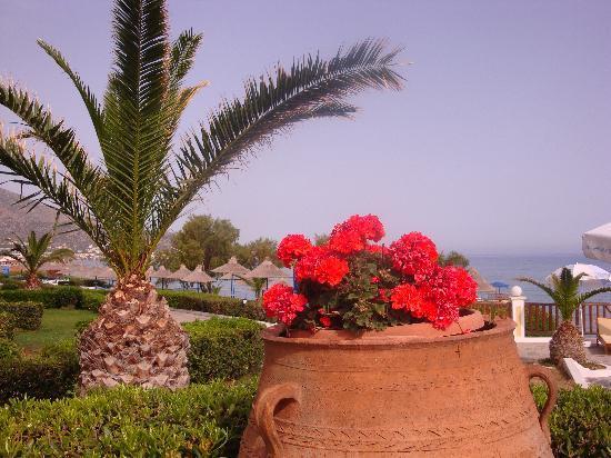 Alexander Beach Hotel & Village: Near main pool