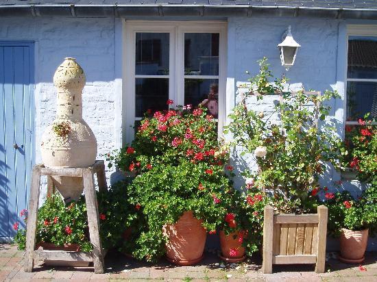 La Maison Bleue en Baie : Des fleurs