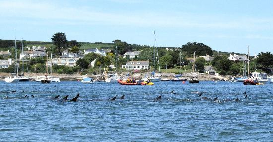 The Ship and Castle Hotel: Dolphin Rescue in St Mawes