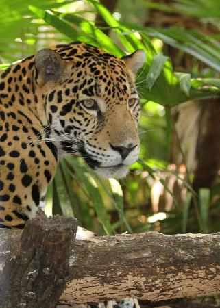 The Belize Zoo Picture