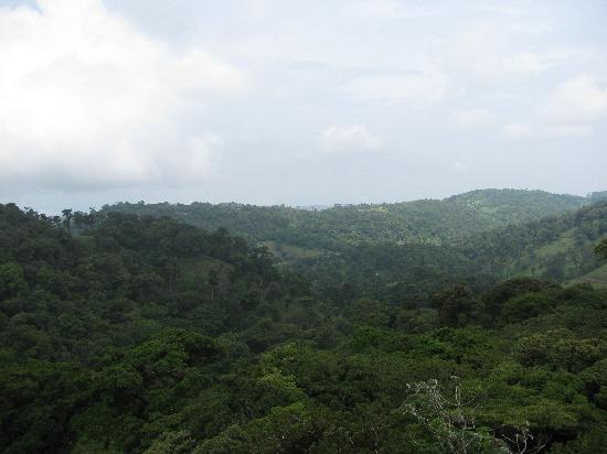 Santa Elena, Costa Rica: View from zip line platform