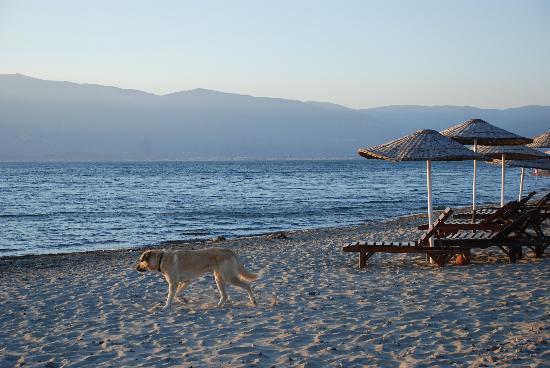 Burhaniye, Turki: Strand