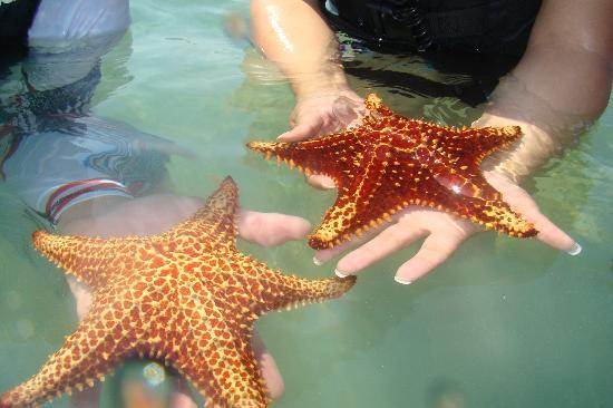Fat Fish Adventures: The most giant magestic starfish