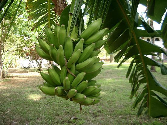 Hotel Paraiso del Cocodrilo: Tropisches Paradies