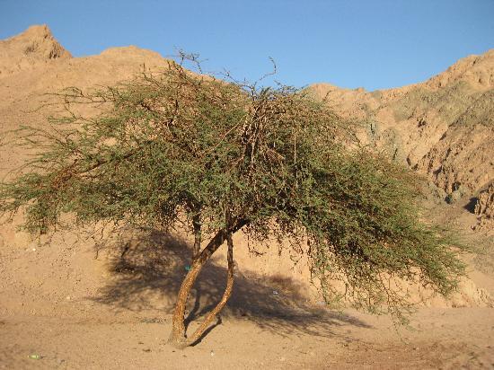 دايف أرج: Life in the Desert a wonderful trip into silence