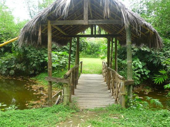 Shishink: Puente colgante