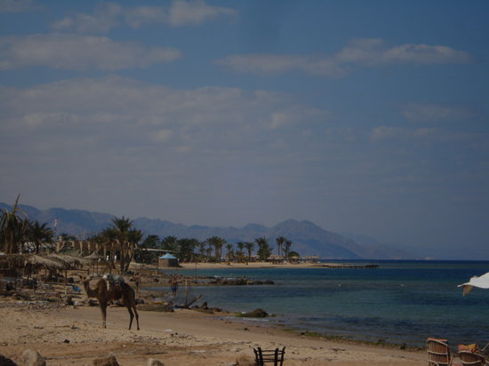 ‪نويبع, مصر: camel on beach‬