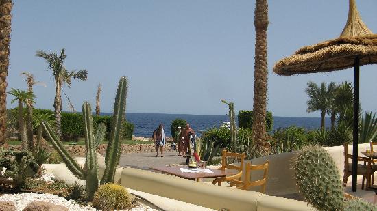 Sharm El Sheikh Marriott Resort: .. Go to eat after a dive ....