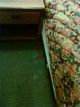 Days Inn Easley West of Greenville/Clemson Area: Worst carpet stain--AM front desk receptionist was uninterested when I shared this photo.